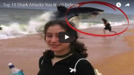 Top Shark Attacks you will not believe