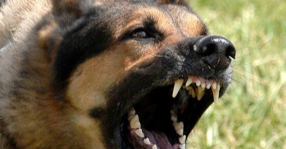 Dog Stop crazy Barking